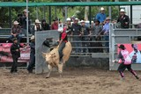 Bull riding rodeo sport American tradition New Caledonia rodeo federation